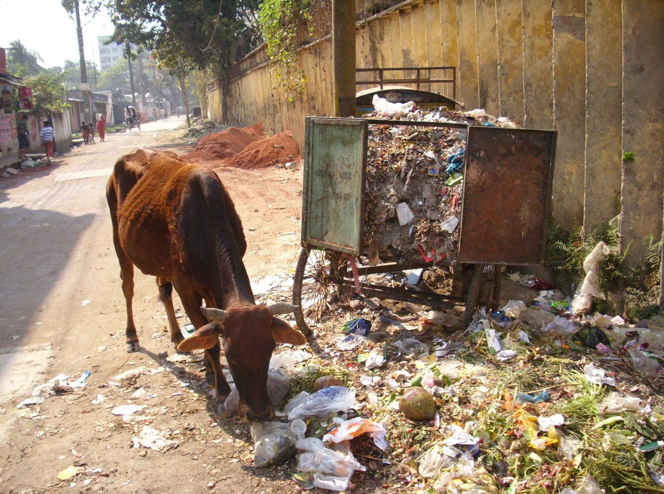 Garbage Menace in Mymensingh