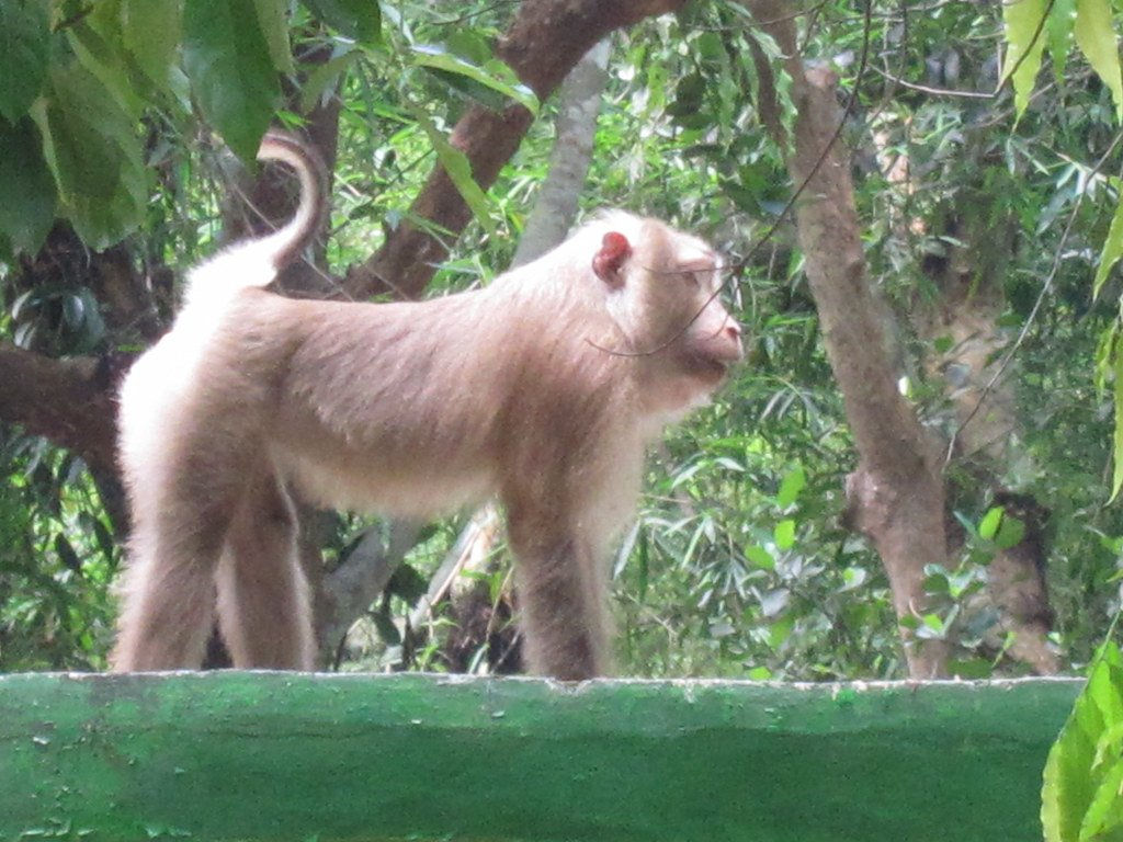Wild Animals Extinct from Mymensingh