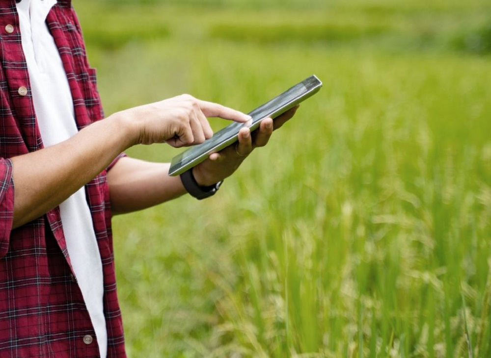 Mobile in Rice Field